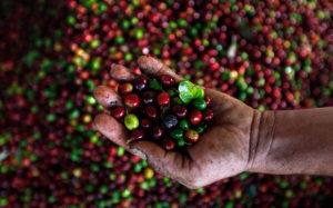 Image result for honduran coffee